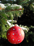 Red Christmas ball on fir tree. Red Christmas ball on snow covered fir tree outside Stock Photography