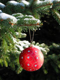 Red Christmas ball on fir tree. Red Christmas ball on snow covered fir tree Royalty Free Stock Images