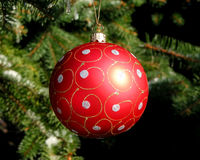 Red Christmas ball on fir tree. Red Christmas ball on snow covered fir tree outside, closeup Stock Photo