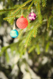 Red Christmas ball on fir-tree branch outdoor Royalty Free Stock Images