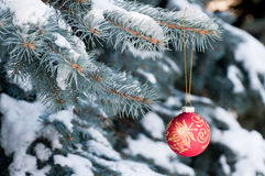 Red Christmas ball with gold pattern on blue spruce Stock Images