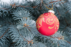 Red Christmas ball with gold pattern on blue spruce Royalty Free Stock Images