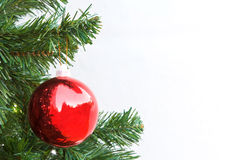 Red Christmas ball and green spruce branch Royalty Free Stock Image