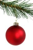 Red christmas ball hanging from branch. Isolated on white background Royalty Free Stock Photo