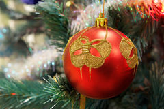 Red Christmas ball hanging on branch Royalty Free Stock Photos