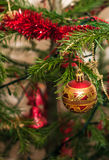 Red Christmas ball hanging on branch Royalty Free Stock Image