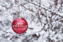 Red Christmas ball hanging on a snowy branch in the winter forest. Stock Photos