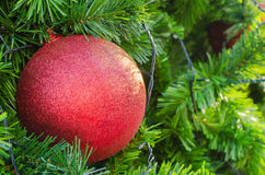 Red Christmas ball hanging on tree.  close up. Royalty Free Stock Photos