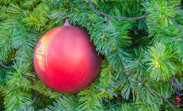 Red Christmas ball hanging on tree.  close up. Stock Image