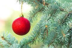 Red Christmas ball - Merry Christmas Royalty Free Stock Photography
