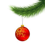 Red Christmas ball on pine branch isolated on white. Background Stock Image