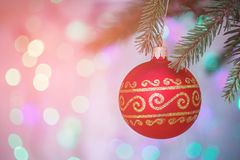 Red Christmas ball on pine branches Royalty Free Stock Image