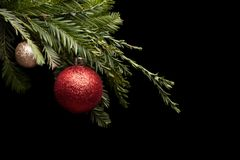 Red Christmas ball on a real pine branch. Red Christmas ball toy on a Christmas tree branch on a black background royalty free stock images