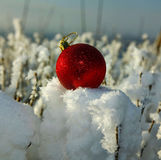 Red Christmas ball in the snow-covered bushes.  Stock Photos