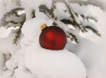 Red  Christmas ball. Red Christmas ball on a snow covered evergreen branch Stock Photos