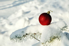 Red Christmas ball on snow covered fir branch close up Royalty Free Stock Image