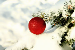 Red Christmas ball on snow covered fir branch close up Stock Image