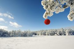 Red Christmas ball on a snow-covered tree branch Stock Photos