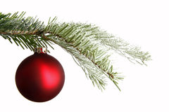 Red Christmas ball on a snowy branch Royalty Free Stock Photo