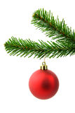 Red christmas ball on a tree Stock Photography