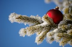 Red christmas ball on tree Royalty Free Stock Image