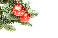 Red christmas ball in tree with room for text. Isolated on white background royalty free stock photography