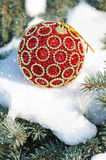 Red christmas ball on winter tree Royalty Free Stock Image