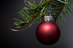 Red christmas bauble. Hanging on a christmas tree branch Stock Photos