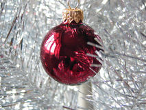 Red Christmas bauble. On xmas tree stock photography