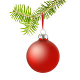 Red christmas bauble on branch Stock Photos