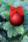 Red Christmas bauble on a fir tree Stock Image
