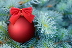 Red Christmas bauble on a fir tree Royalty Free Stock Image