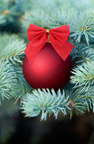 Red Christmas bauble on a fir tree Stock Photo