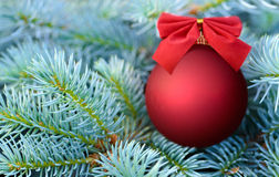 Red Christmas bauble on a fir tree Stock Photos