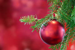 Red christmas bauble on green fir branch Stock Photo