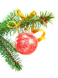 Red Christmas bauble on a green spruce branch Stock Image