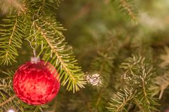Red Christmas bauble hanging from the branch of a Christmas tree stock photos