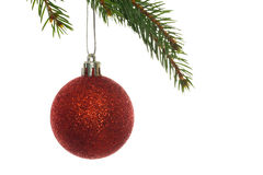Red christmas bauble hanging from branch Royalty Free Stock Image
