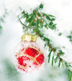 Red Christmas bauble hanging outdoors in a Xmas tree Stock Photography