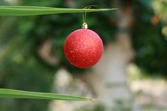 Christmas bauble on a palm tree stock photography