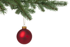 Red Christmas bauble hanging on pine tree Royalty Free Stock Photos