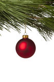 Red Christmas bauble hanging on tree Royalty Free Stock Photos