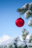 Red Christmas Bauble on Pine Tree Stock Photo