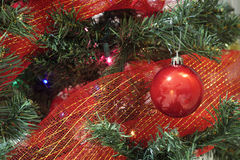 Red christmas bauble with ribbon in a tree Stock Photography