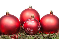 Red Christmas baubles on green spruce tree branch Stock Photography