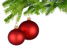 Red Christmas baubles hanging from fresh green twigs Royalty Free Stock Image