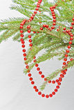 Red Christmas beads on green fir branch Royalty Free Stock Photography