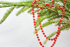 Red Christmas beads on green fir branch close up Stock Photos