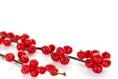 Red Christmas berries. Winterberry Christmas branches with red holly berries Stock Photography