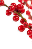 Red Christmas berries. Winterberry Christmas branches with red holly berries Stock Images